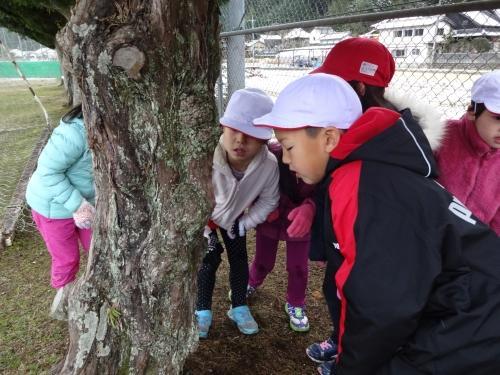 木の観察.jpg