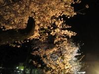 20160405sakura006.jpg
