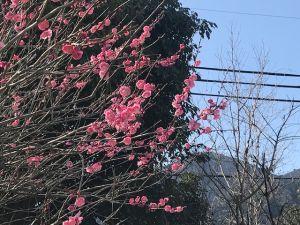 梅の写真.jpg