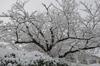雪の日①.jpg